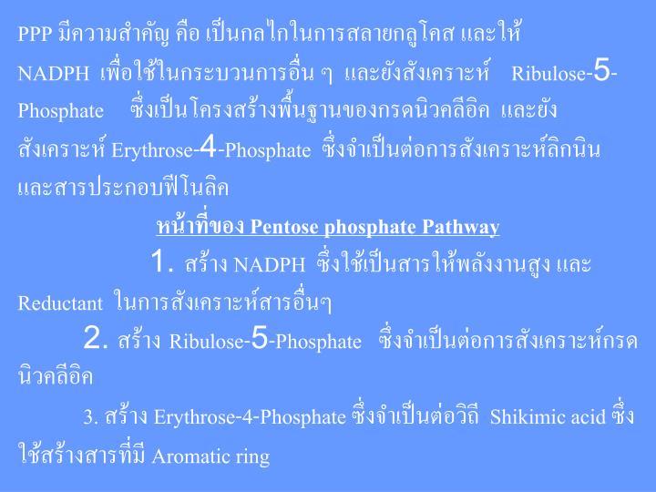 PPP มีความสำคัญ คือ เป็นกลไกในการสลายกลูโคส และให้ NADPH เพื่อใช้ในกระบวนการอื่น ๆ และยังสังเคราะห์    Ribulose-5-Phosphate     ซึ่งเป็นโครงสร้างพื้นฐานของกรดนิวคลีอิค และยังสังเคราะห์ Erythrose-4-Phosphate ซึ่งจำเป็นต่อการสังเคราะห์ลิกนิน และสารประกอบฟีโนลิค