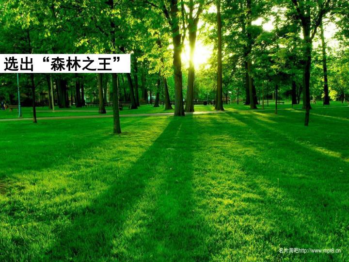 """选出""""森林之王"""""""