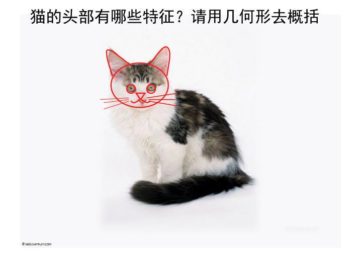 猫的头部有哪些特征?请用几何形去概括