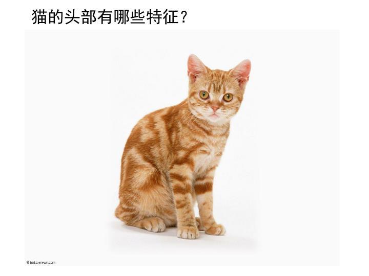 猫的头部有哪些特征?