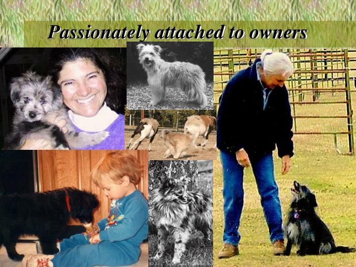 Passionately attached to owners