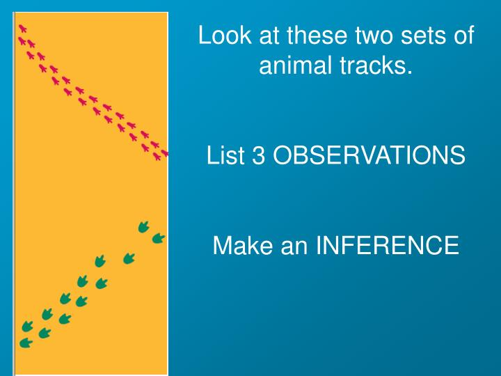 Look at these two sets of animal tracks.