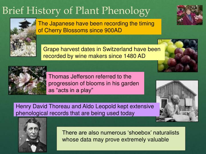 Brief History of Plant Phenology