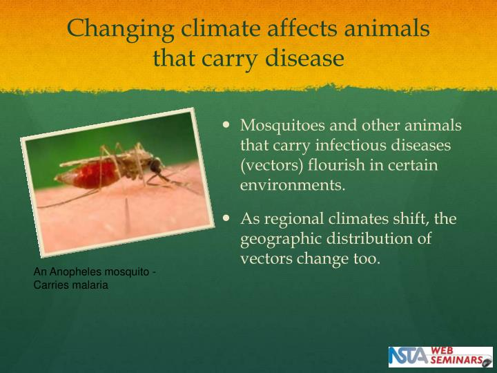 Changing climate affects animals that carry disease
