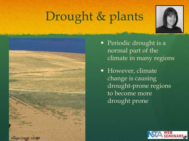 Drought & plants