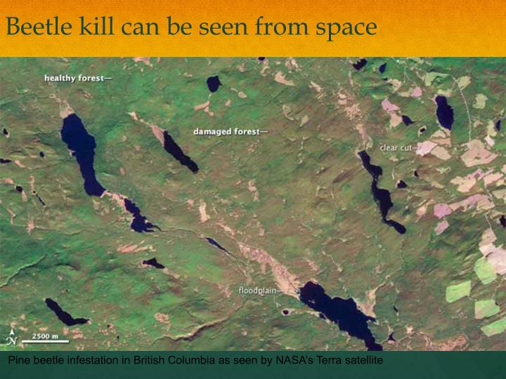 Beetle kill can be seen from space