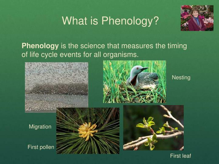 What is Phenology?