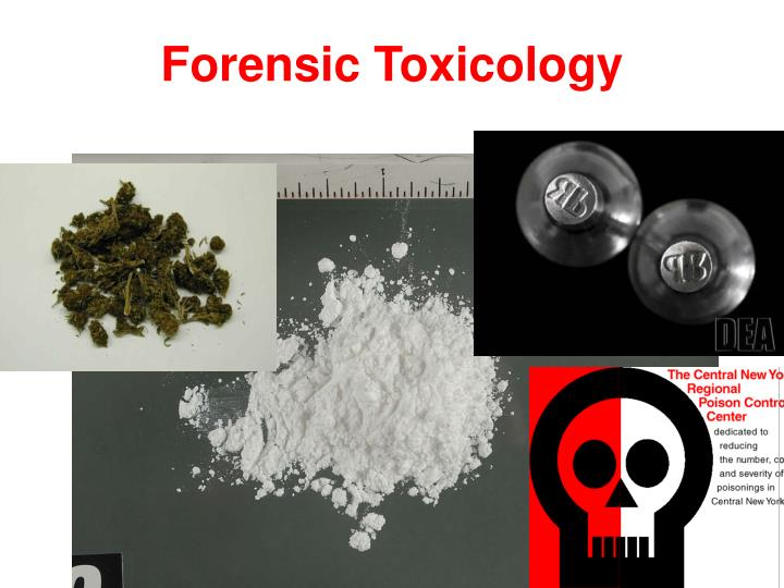 forensic toxicology Forensic toxicology 1 forensicforensic toxicologytoxicology dr mohd kaleem khan assistant professor department of forensic.