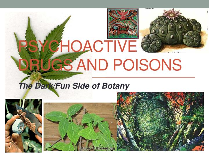 Psychoactive drugs and poisons