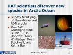 uaf scientists discover new species in arctic ocean