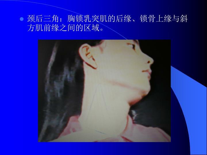 颈后三角:胸锁乳突肌的后缘、锁骨上缘与斜方肌前缘之间的区域。