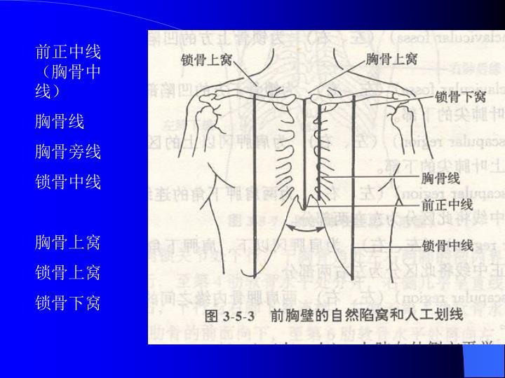 前正中线(胸骨中线)