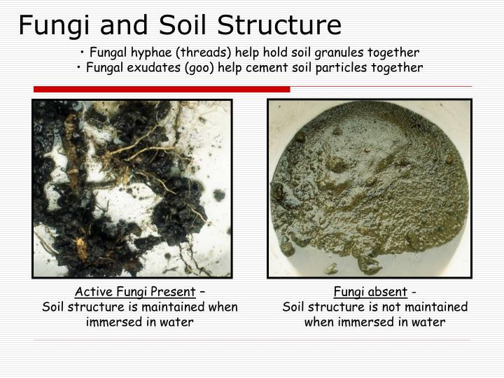 Fungi and Soil Structure