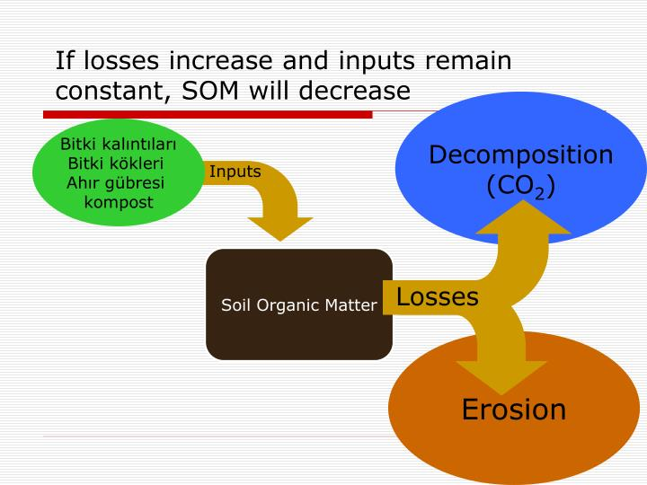 If losses increase and inputs remain constant, SOM will decrease