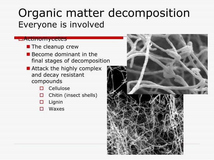 Organic matter decomposition