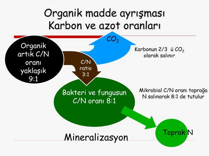 Bakteri ve fungusun