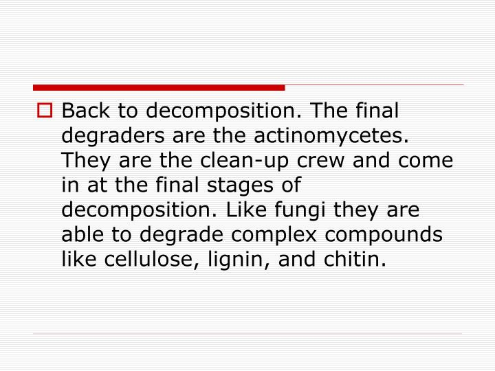 Back to decomposition. The final degraders are the actinomycetes. They are the clean-up crew and come in at the final stages of decomposition. Like fungi they are able to degrade complex compounds like cellulose, lignin, and chitin.