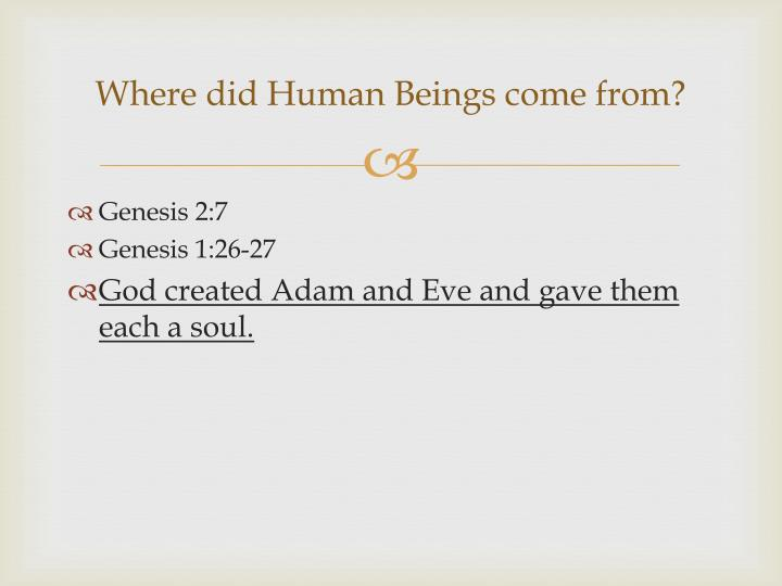 Where did Human Beings come from?