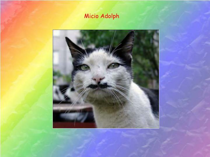 Micio Adolph