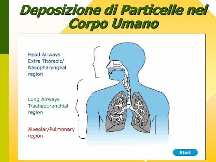 Deposizione di Particelle nel Corpo Umano