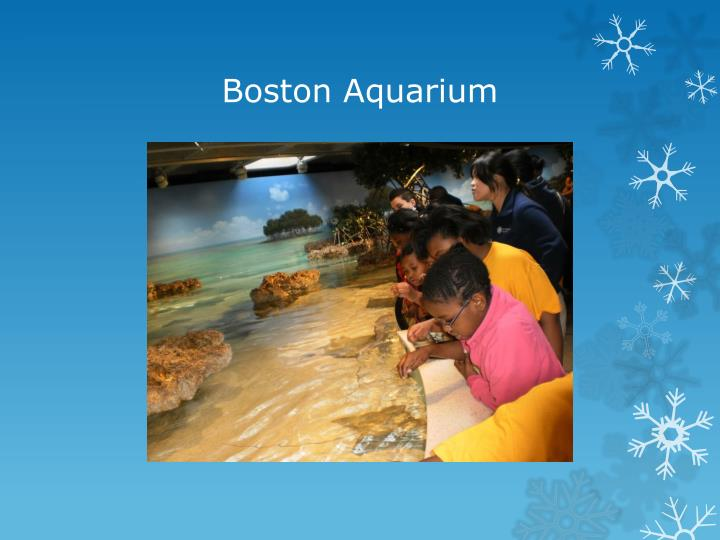 Boston Aquarium
