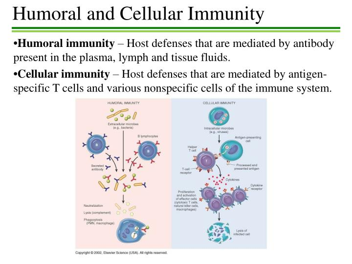 immunity humoral cellular antibody mediated immune cells antigen defenses specific presentation ppt plasma system structure powerpoint host slideserve