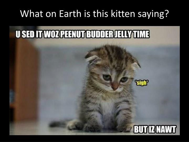What on Earth is this kitten saying?