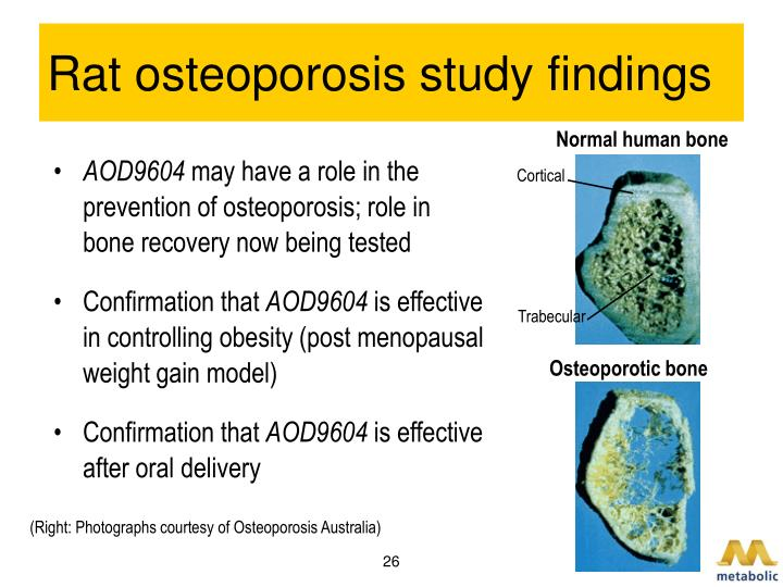 Rat osteoporosis study findings