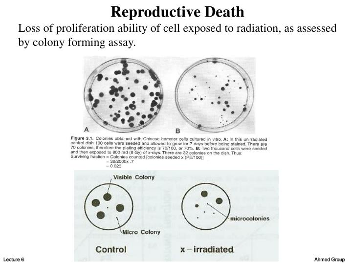 Reproductive Death