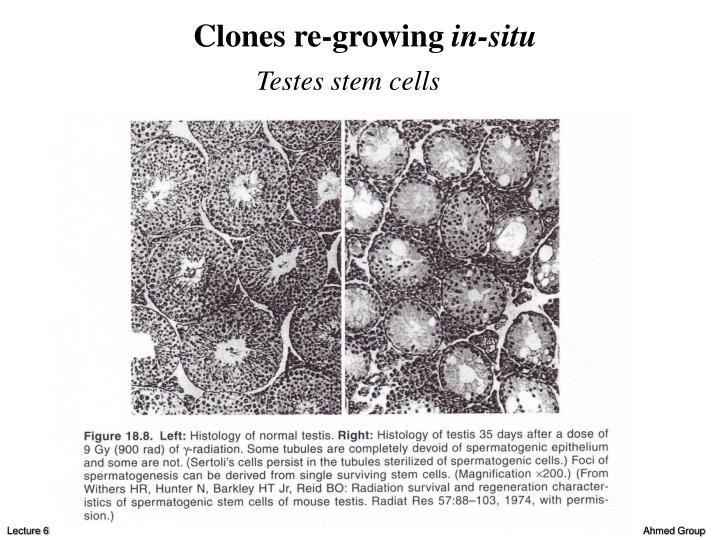 Clones re-growing