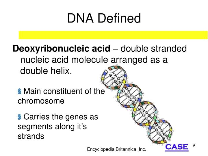 DNA Defined