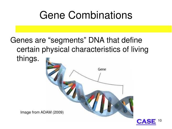 Gene Combinations