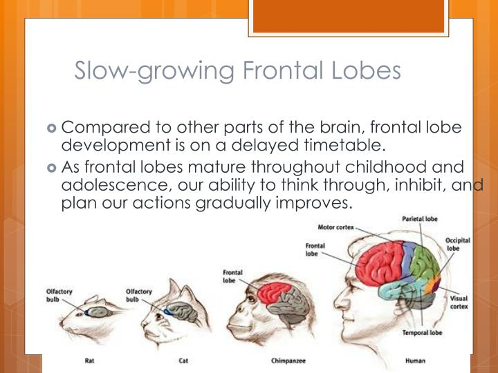 Slow-growing Frontal Lobes