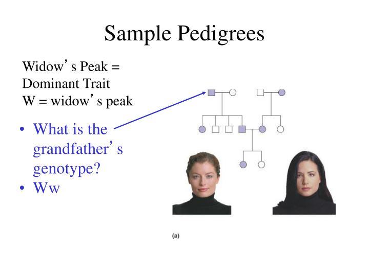 Sample Pedigrees