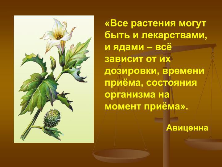 «Все растения могут быть и лекарствами, и ядами – всё зависит от их дозировки, времени приёма, состояния организма на момент приёма».