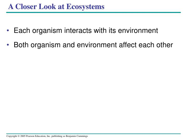 A Closer Look at Ecosystems