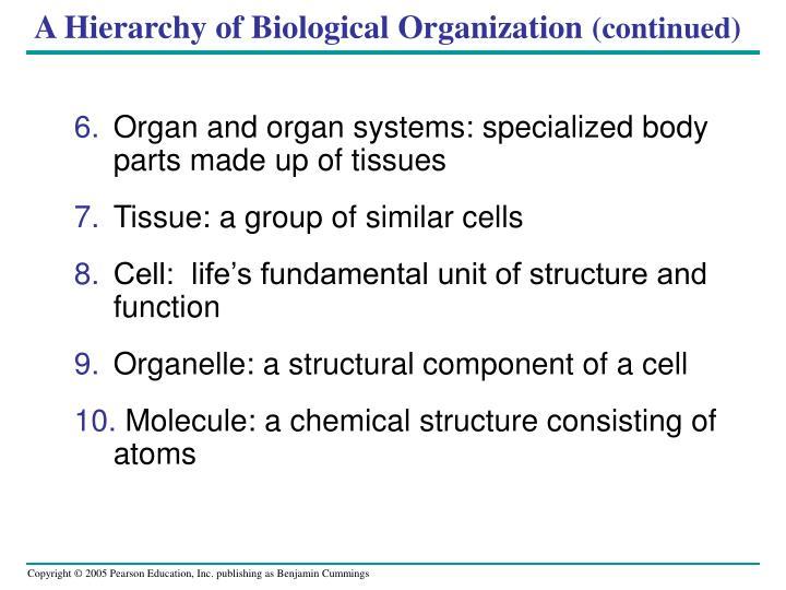 A Hierarchy of Biological Organization