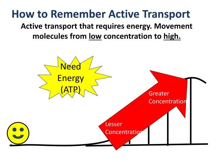 Need Energy (ATP)