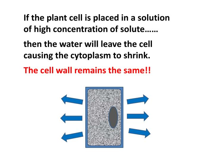 If the plant cell is placed in a solution of high concentration of solute……