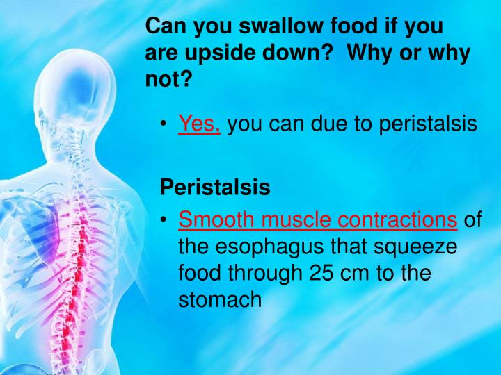 Can you swallow food if you are upside down?  Why or why not?