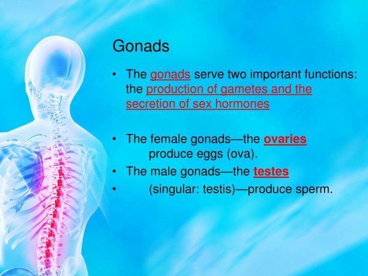 Gonads