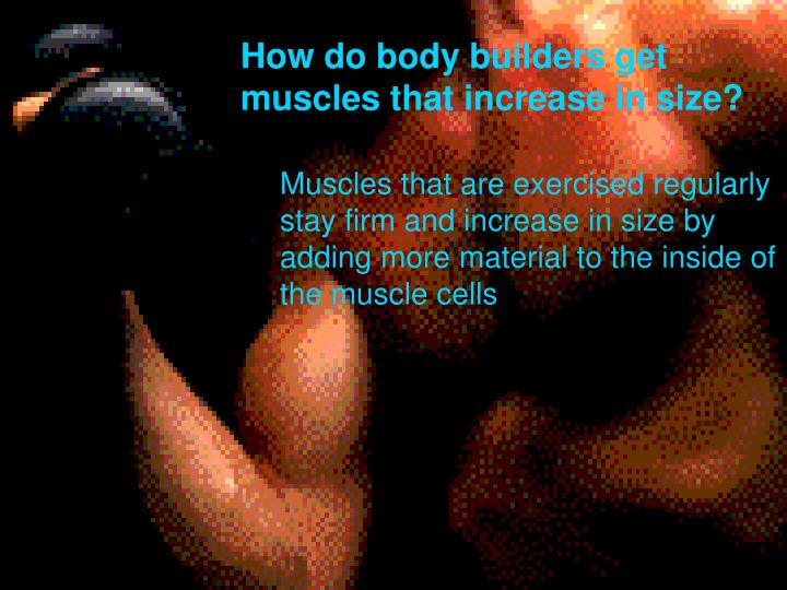 How do body builders get muscles that increase in