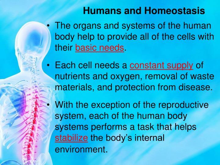 Humans and Homeostasis