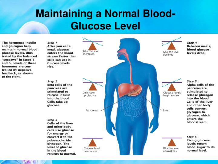 Maintaining a Normal Blood-Glucose Level