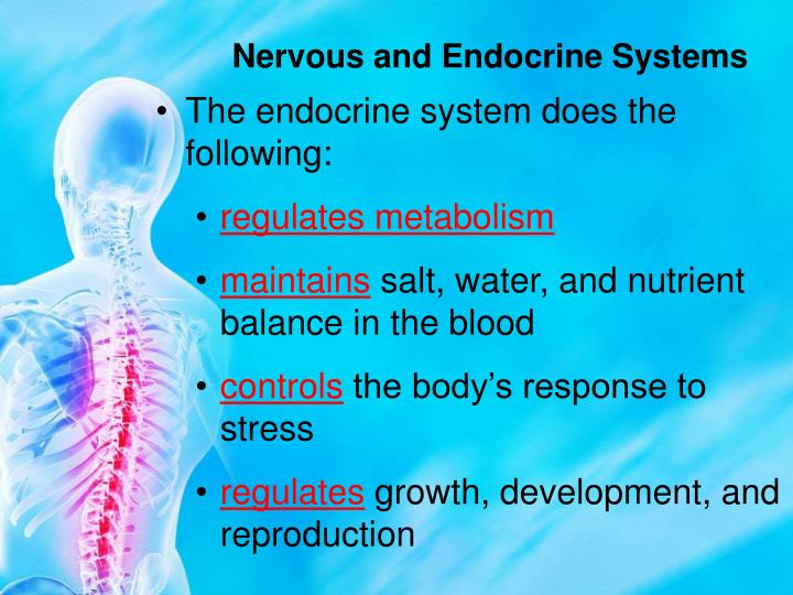Nervous and Endocrine Systems