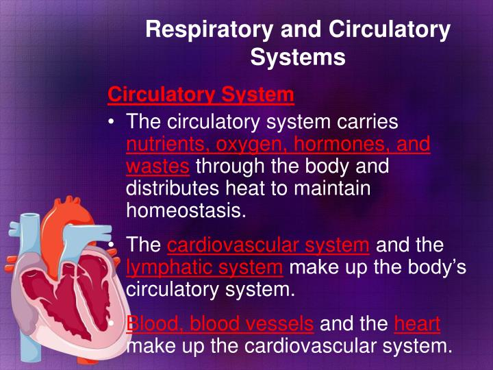 Respiratory and Circulatory Systems
