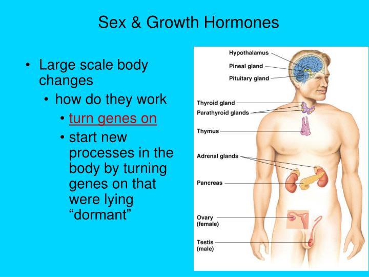 Sex & Growth Hormones