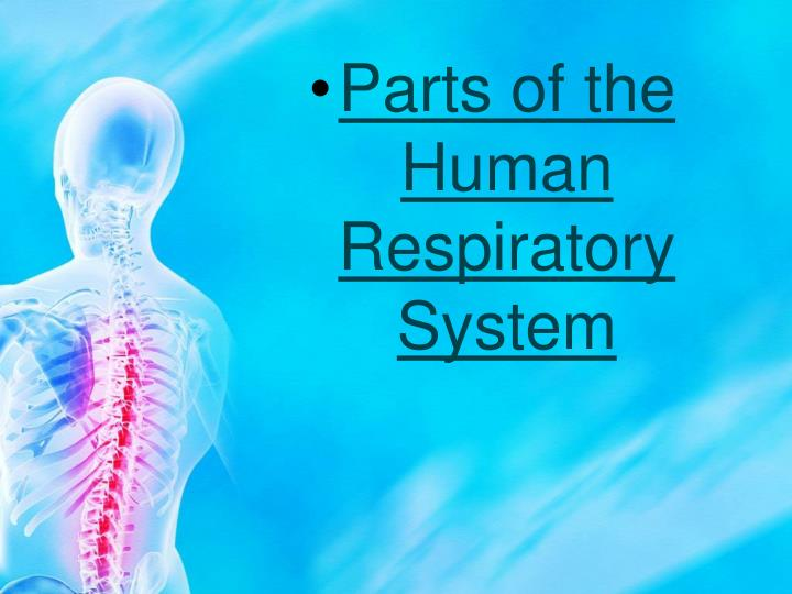 Parts of the Human Respiratory System
