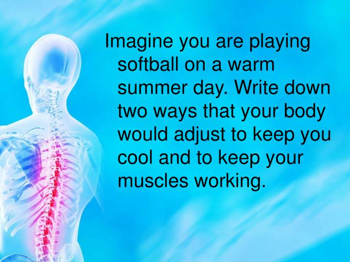 Imagine you are playing softball on a warm summer day. Write down two ways that your body would adjust to keep you cool and to keep your muscles working.
