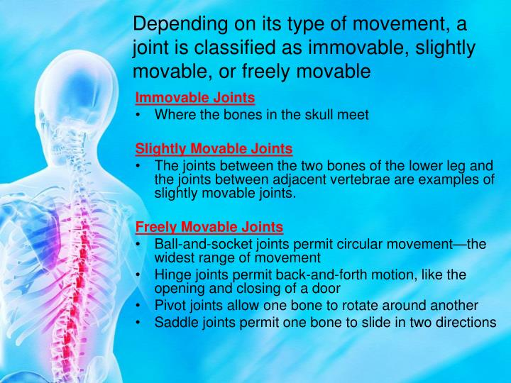 Depending on its type of movement, a joint is classified as immovable, slightly movable, or freely movable